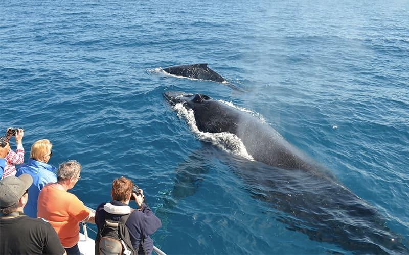 humpback tour